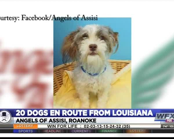 ANGELS LOUISIANA DOGS_36612800-159532