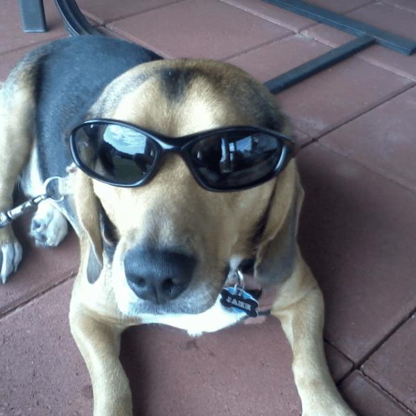 dog days_1472211001193.PNG