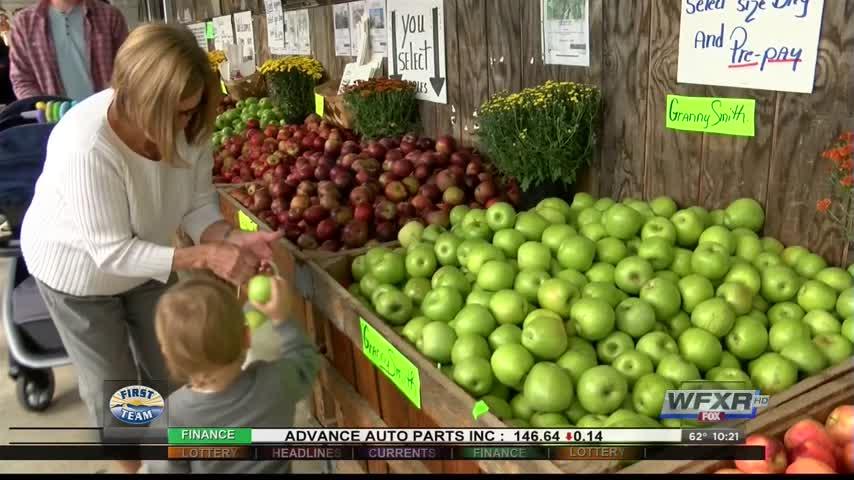 Ag Life- Gross- Orchard hosts annual Apple Harvest Festival_72359815-159532