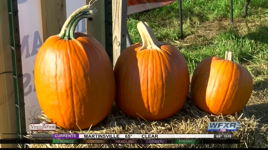 Ag Life- Pumpkins and the warm weather_40358106-159532
