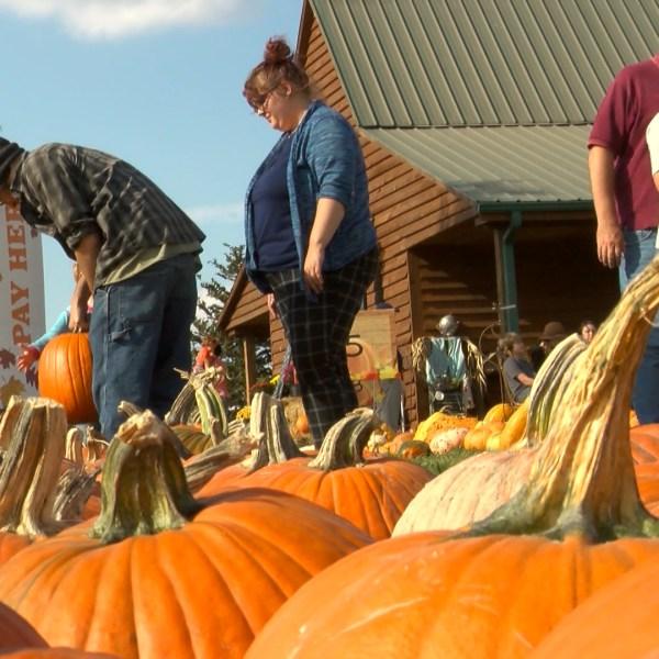 pumpkin festival_1477889938470.jpg