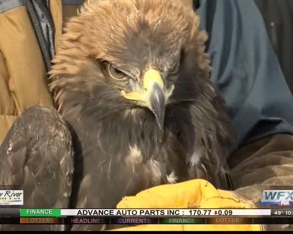 golden eagle release_16208658-159532