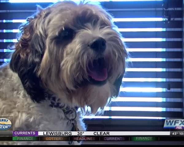 Experts explain how to keep pets healthy in cold weather_58089461