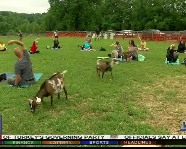 Goat Yoga arrives in Southwest Virginia_77556778