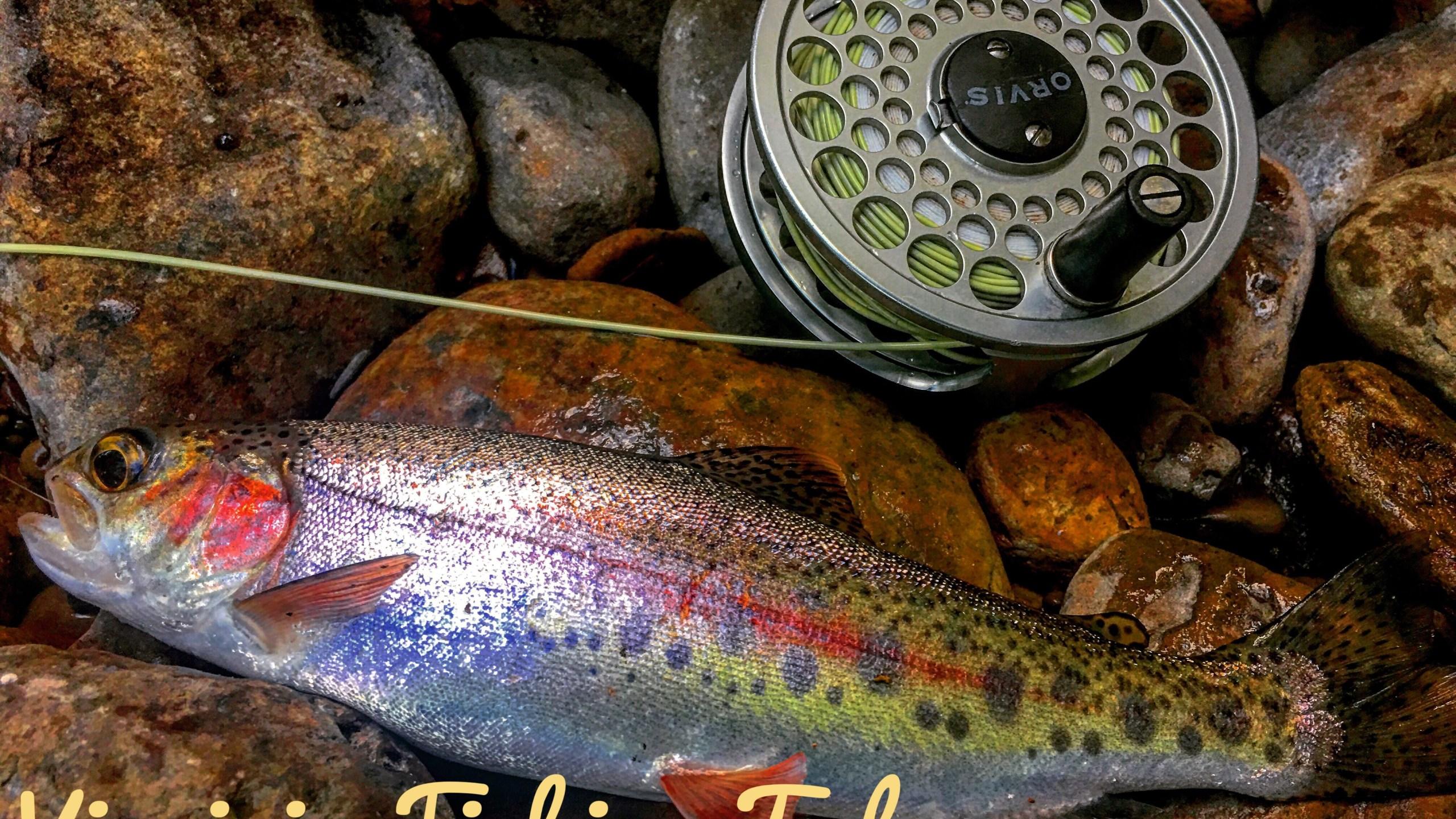 Lower Jackson VA Fishing Tales