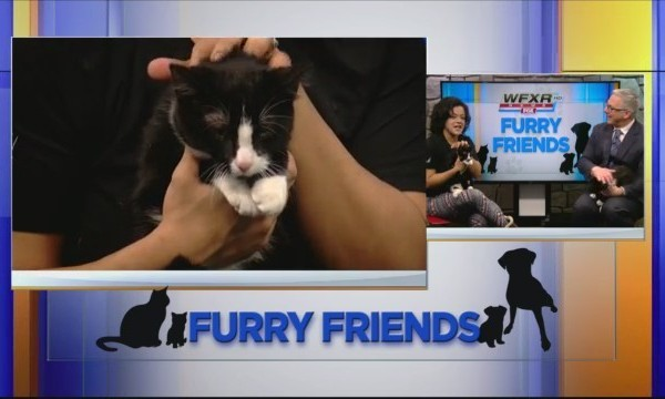 Furry_Friends__Meet_the_cuddly_Quin_and__0_20180226143520