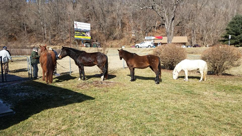 Giles County horses_1517595901338.jpg.jpg
