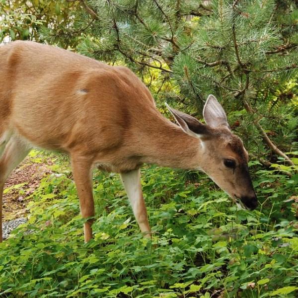 deer-1574655_960_720_1520543397248.jpg