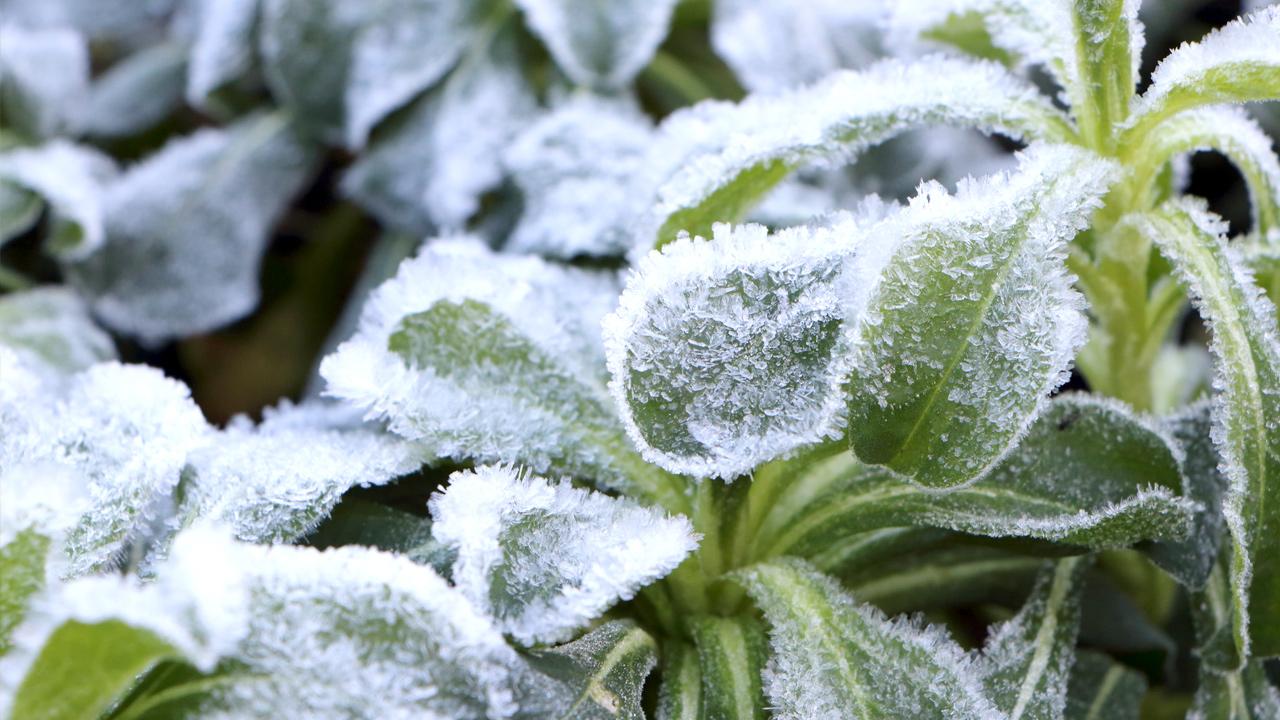 winter-frost-garden-plants-flowers_1514315515474_326902_ver1_20171227055630-159532