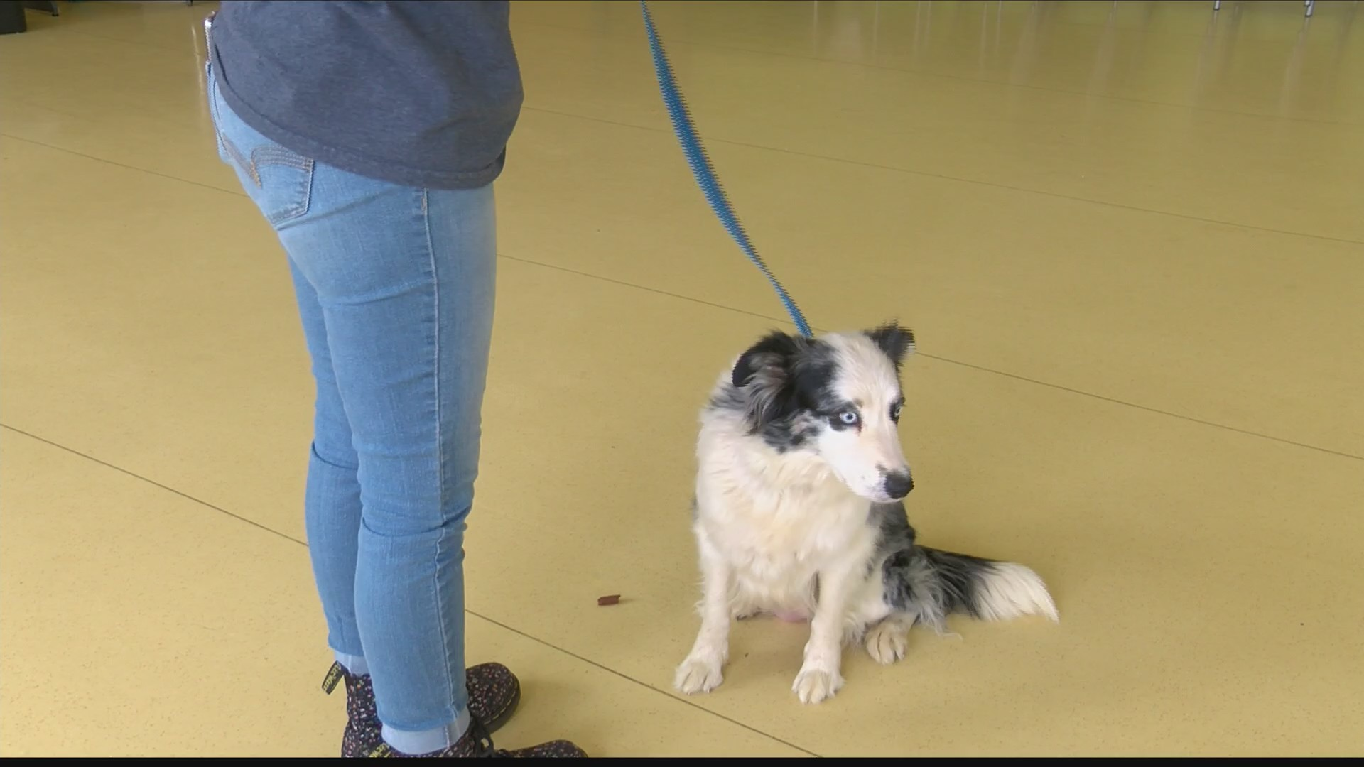 New details emerge in 45-animal rescue in Lynchburg