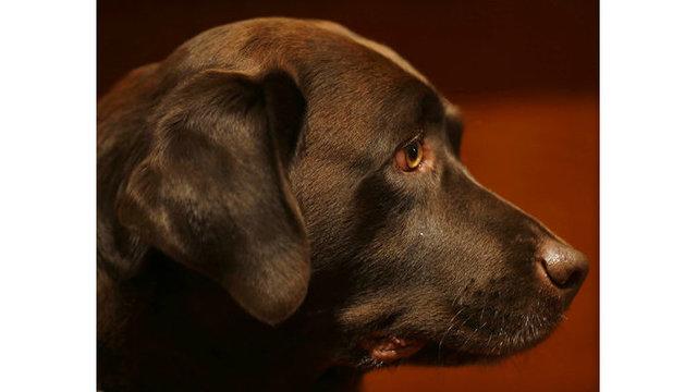 Dog Breeds_1553102504154
