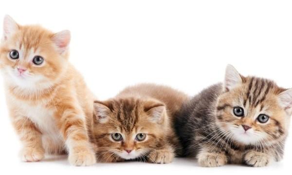 kittens-jpg_159221_ver1_20161218221531-159532