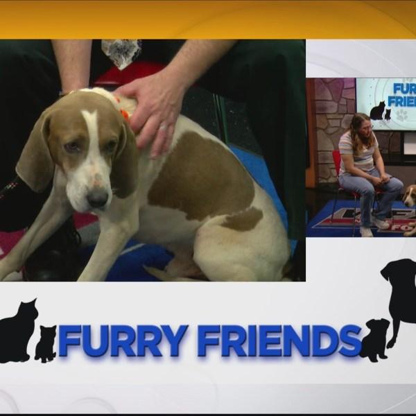 Furry_Friends__Meet_Fox_from_the_Frankli_0_20190508153210