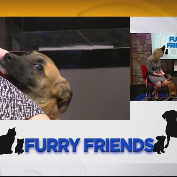 Furry_Friends__Meet_Shep_from_the_Roanok_0_20190514200758