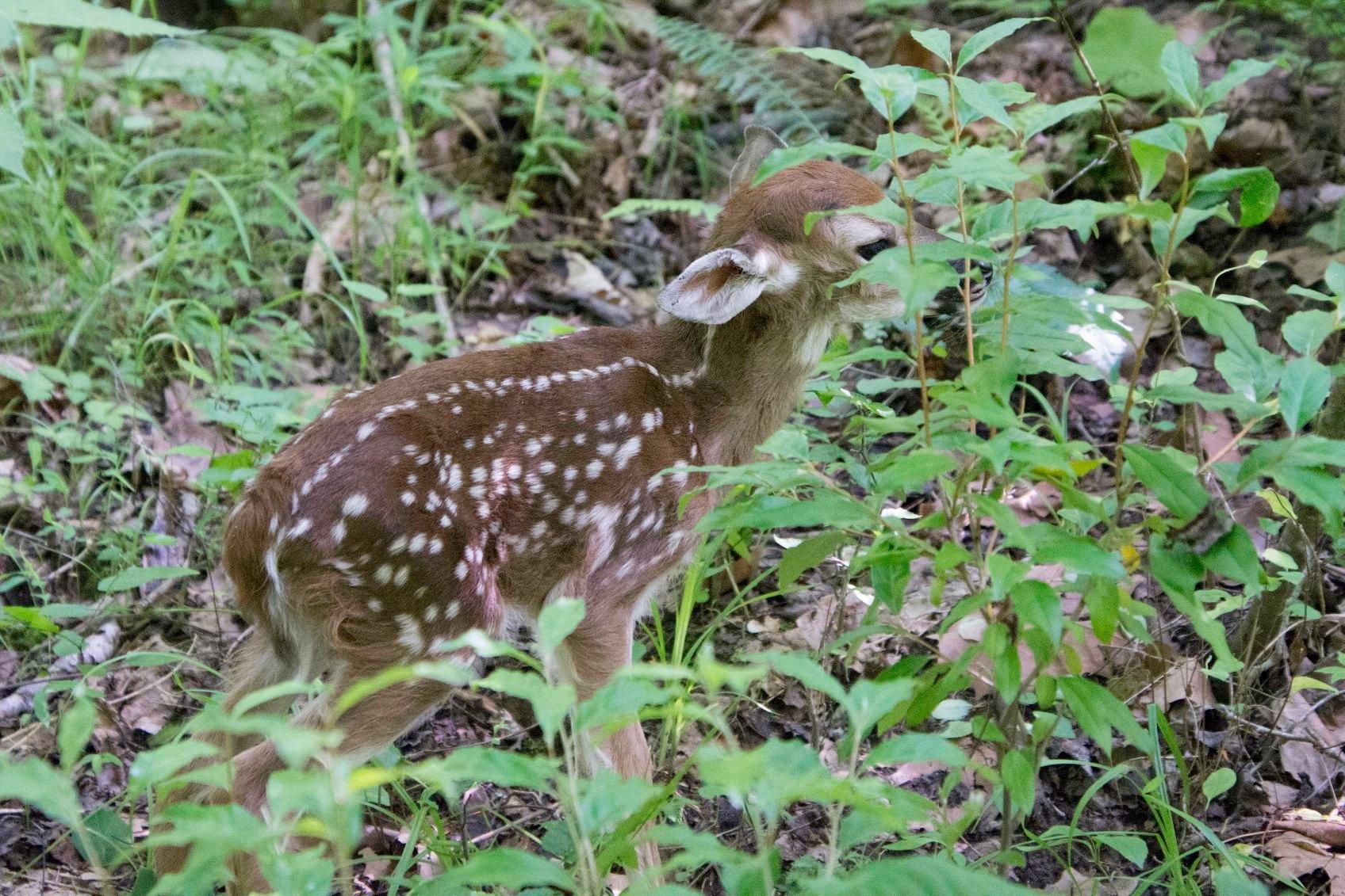 Oh deer 1_1559670251273.jpg.jpg