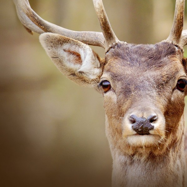 The dry season is impacting white-tailed deer who are more vulnerable to catching a disease as they gather near water trying to survive the dry heat.