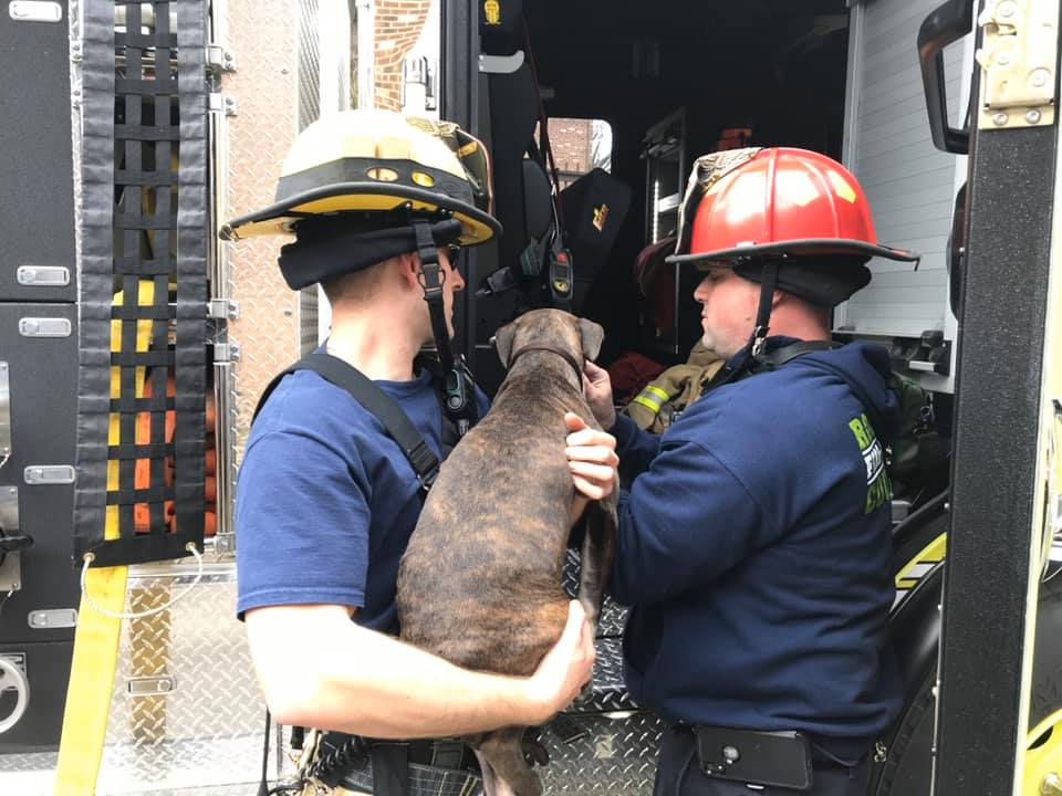 Firefighters rescued a dog from an apartment fire in Vinton on Friday, Feb. 28. (Photo: Courtesy Roanoke County Fire and Rescue Department)