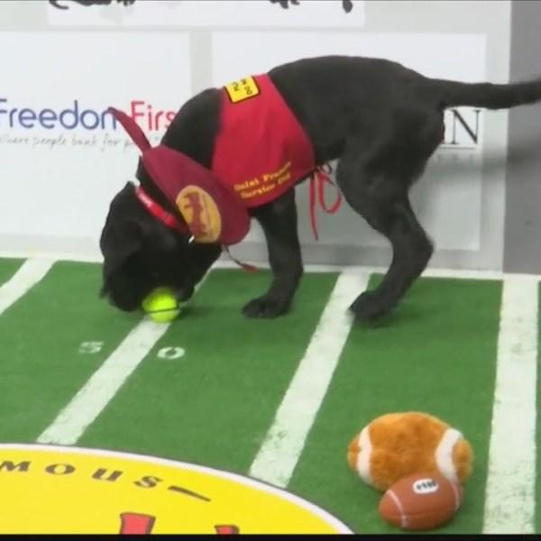 Puppy Bowl second half
