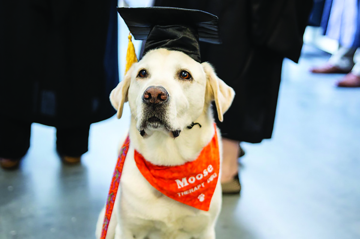 Moose, a therapy dog at the Virginia Tech Cook Counseling Center, passed away on Wednesday, Dec. 2, after spending months battling prostate cancer. (Photo: Courtesy Virginia Tech)