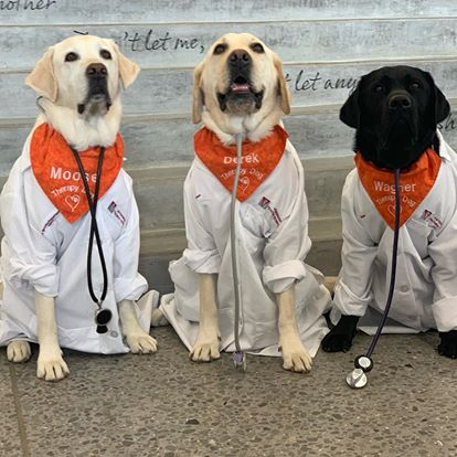 Moose worked alongside three other therapy dogs at the Virginia Tech Cook Counseling Center, including Derek and Wagner. (Photo: Courtesy Virginia Tech)
