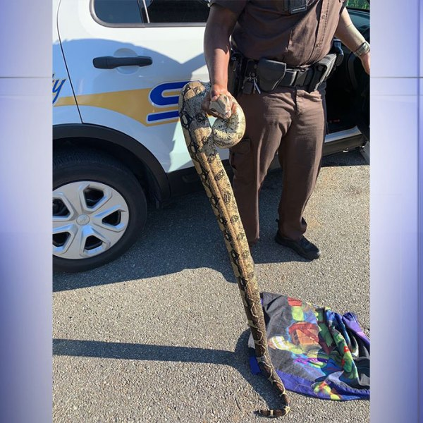 (Photo: Courtesy Amherst County Sheriff's Office)